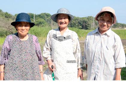 浦戸野々島・白菜生産者