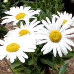 塩竈市の花